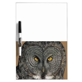 Great Gray Owl Up Close Dry Erase Board Message Bd