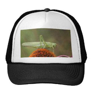 Great Green Bush-Cricket  (Tettigonia viridissima) Cap