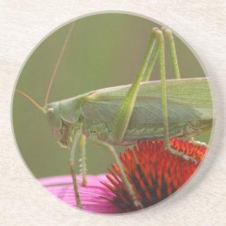 Great Green Bush-Cricket  (Tettigonia viridissima) Coaster