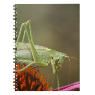 Great Green Bush-Cricket  (Tettigonia viridissima) Notebook