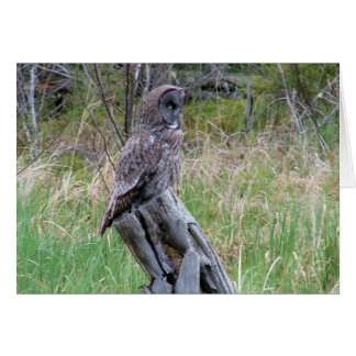 Great Grey Owl in the Wild Card