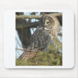 Great Grey Owl Photo Gift Mouse Pad