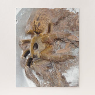 Great Horn Baboon Spider Jigsaw Puzzle