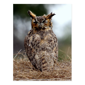 Great Horned Owl - 2 - 9 - 08 Postcard