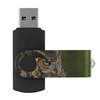 Great Horned Owl, Bubo virginianus, Captive USB Flash Drive