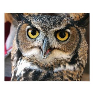Great Horned Owl (Bubo virginianus) Photo