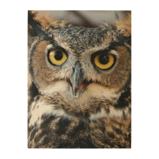 Great Horned Owl (Bubo virginianus) Wood Canvases