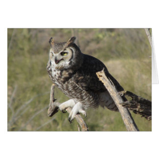 Great Horned Owl Card