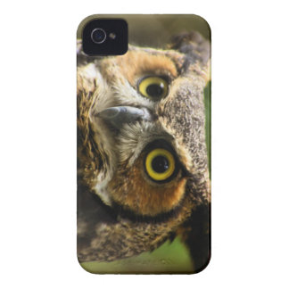 Great Horned Owl Case