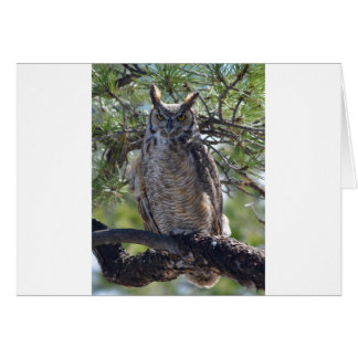 Great Horned Owl in the Tree Card