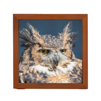 Great Horned Owl Portrait Desk Organiser