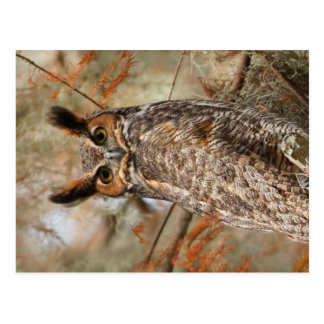 Great Horned Owl Postcard