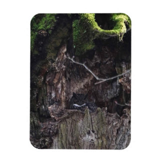 Great Horned Owl Sleeping in the Tree Magnet