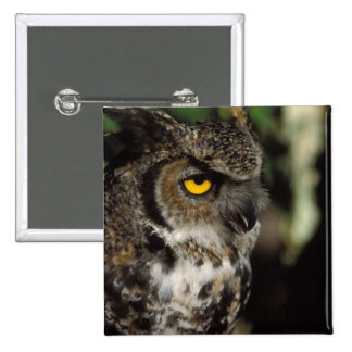 great horned owl, Stix varia, in the Anchorage 15 Cm Square Badge