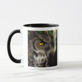 great horned owl, Stix varia, in the Anchorage Mug