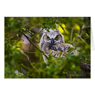 Great Horned Owlet Card