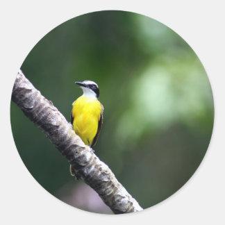 Great Kiskadee bird Amazon rain forest Sticker