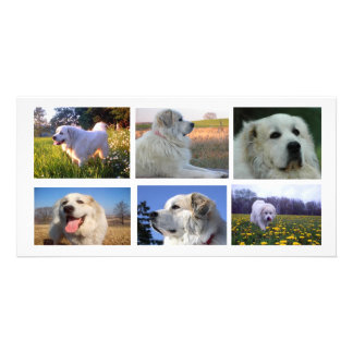 Great Pyrenees Collage Photo Greeting Card