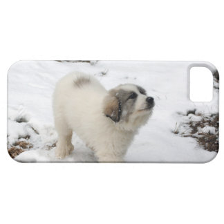 Great Pyrenees Puppy Barely There iPhone 5 Case