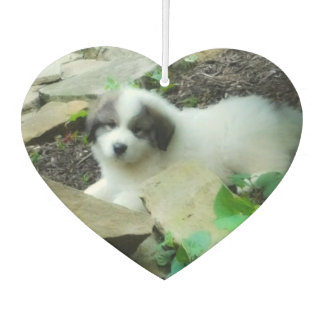 Great Pyrenees Sweet Puppy 2