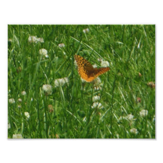 Great Spangled Fritillary Butterfly Photo Print