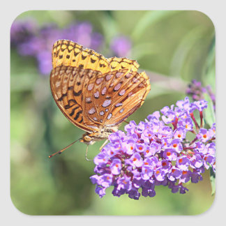 Great spangled fritillary butterfly profile square sticker