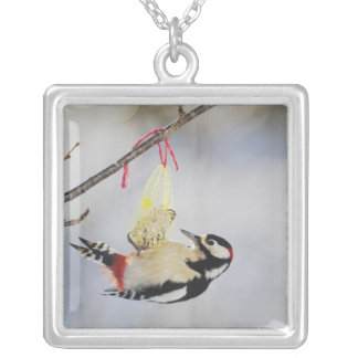 Great Spotted Woodpecker (Dendrocopos major), Silver Plated Necklace