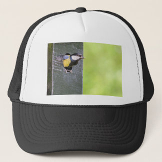 Great tit parent in hole of nest box trucker hat
