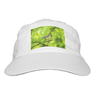 Great tit, parus major hat