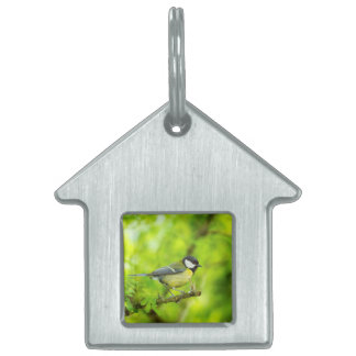 Great tit, parus major pet name tag