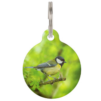 Great tit, parus major pet tag