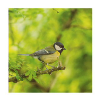 Great tit, parus major wood canvases