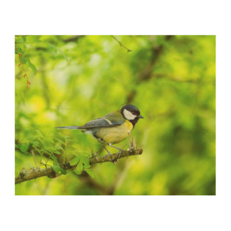 Great tit, parus major wood wall decor