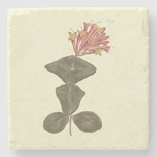 Great Trumpet Honeysuckle Botanical Illustration Stone Coaster