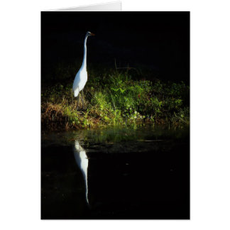 Great White Egret Card