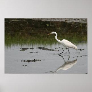 Great White Egret Print