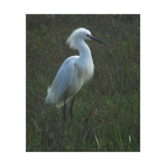 Great White Heron Gallery Wrap Canvas