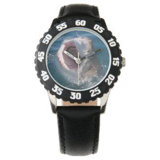 Great White Shark Watch