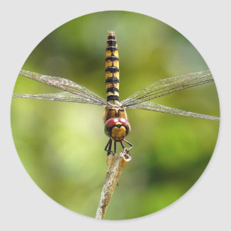 Greater Crimson Glider Dragonfly Round Sticker