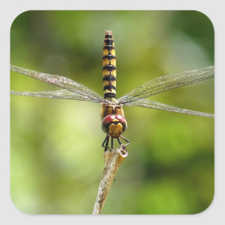Greater Crimson Glider Dragonfly Square Sticker