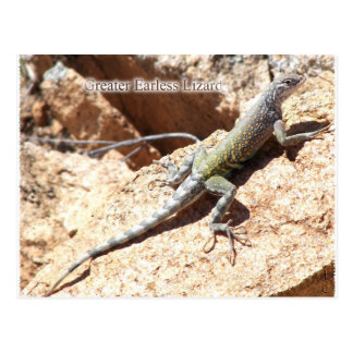 Greater Earless Lizard Postcard