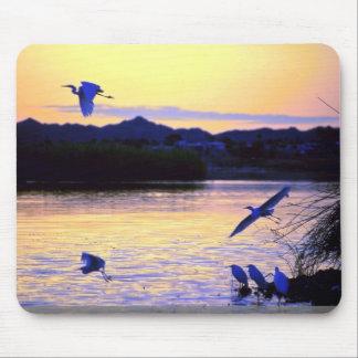 Greater egret, lower Colorado River, U.S.A. Mousepads