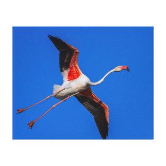 Greater flamingo, phoenicopterus roseus canvas print