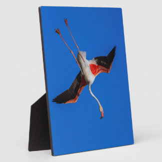Greater flamingo, phoenicopterus roseus plaque