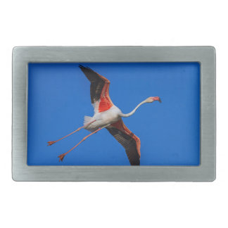 Greater flamingo, phoenicopterus roseus rectangular belt buckle