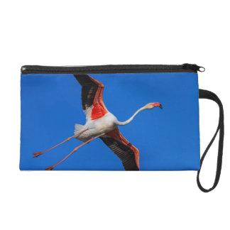 Greater flamingo, phoenicopterus roseus wristlet