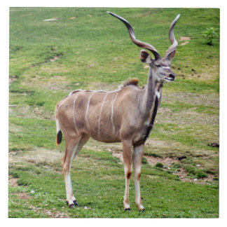 greater-kudu-4 ceramic tile