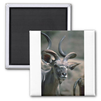 Greater Kudu Magnet