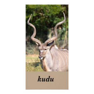 Greater Kudu photocard Picture Card