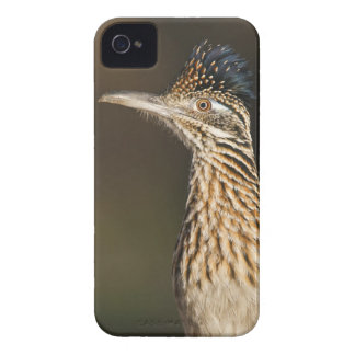 Greater Roadrunner in Texas iPhone 4 Case